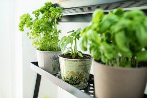 hoehnerhaus - Pflanzen in der Küche